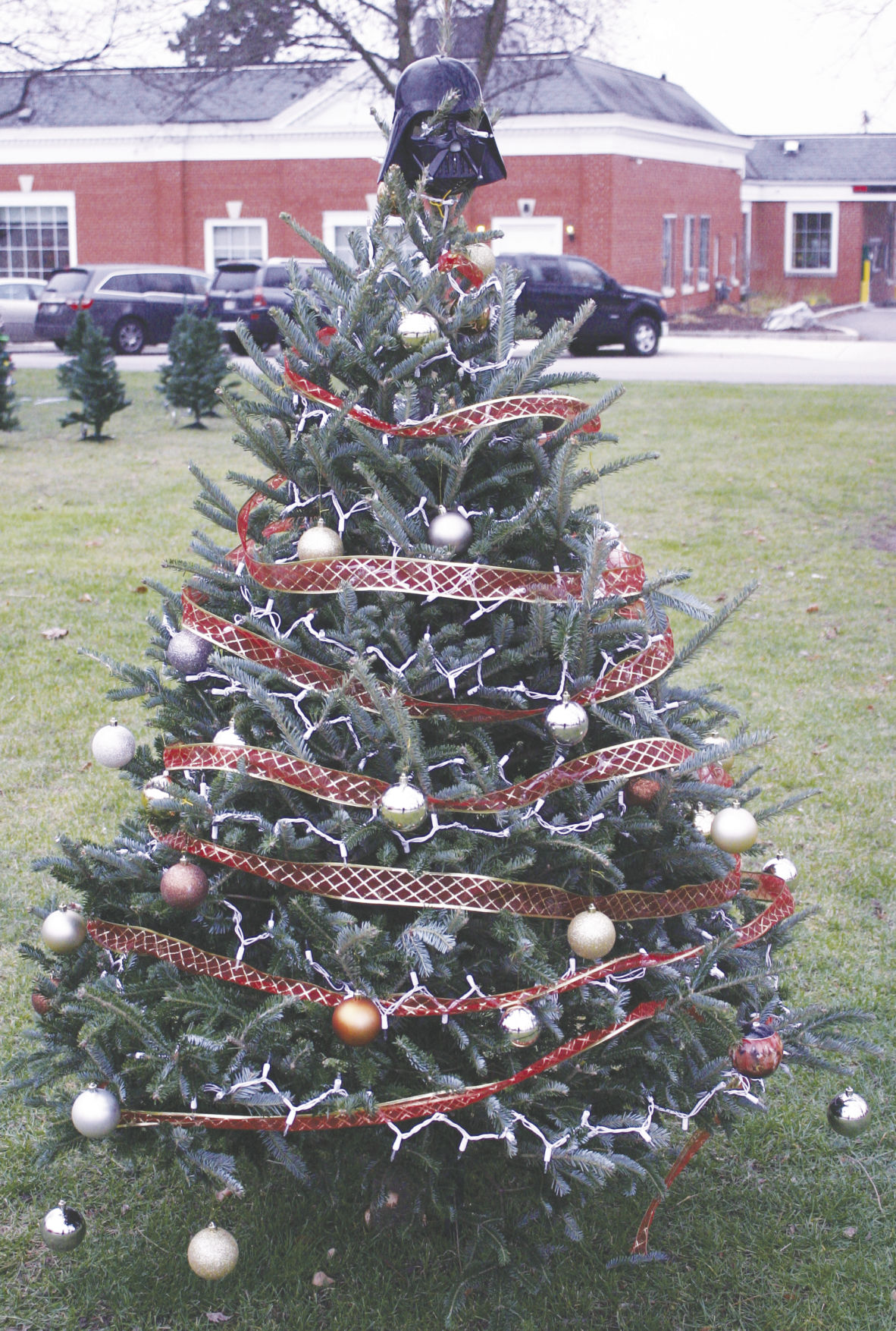 Cambridge trees were decorated by volunteers for the Christmas event that included horsedrawn hayrides, caroling, strolling madrigals, and a traditional tree lighting.
