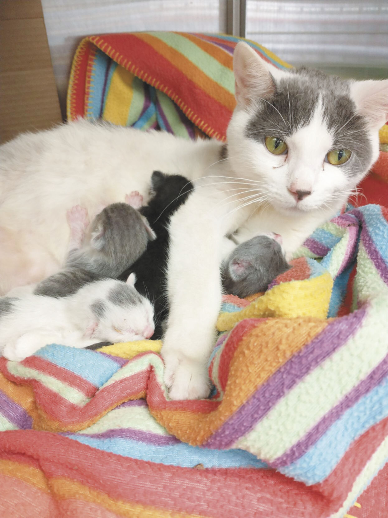 Rescued kittens and mom