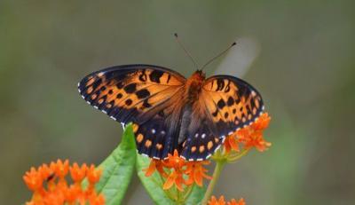 DNR, partners work to improve 2,000 acres of pollinator habitat In Southwestern Wisconsin