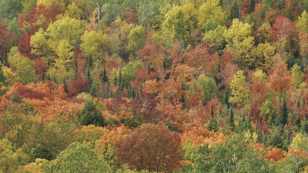 The science behind the fall colors