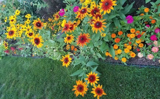 August Garden of the Month announced