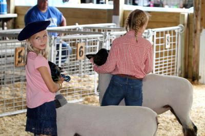 Youth Livestock Expo