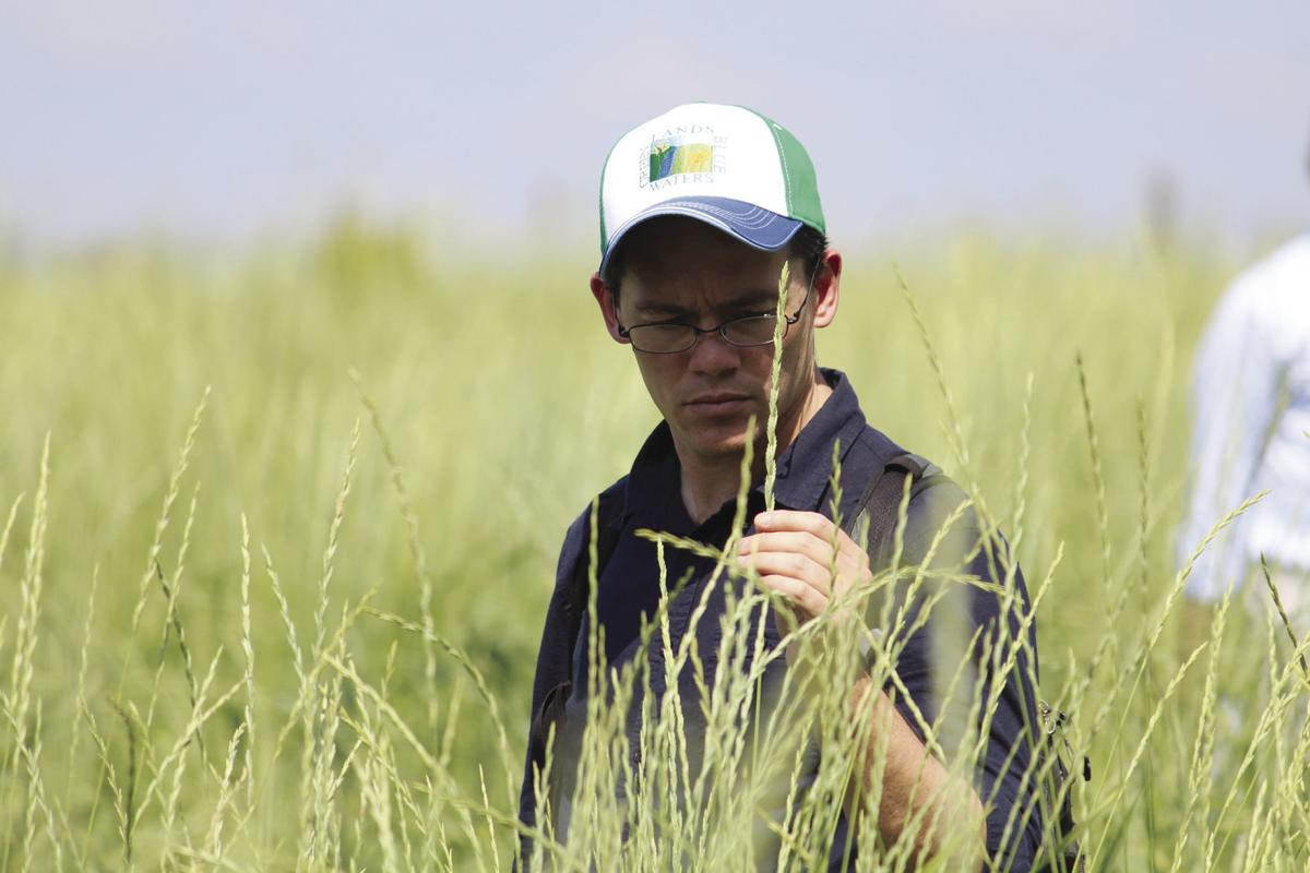 Farmers, researchers discuss latest findings on world's first perennial grain crop