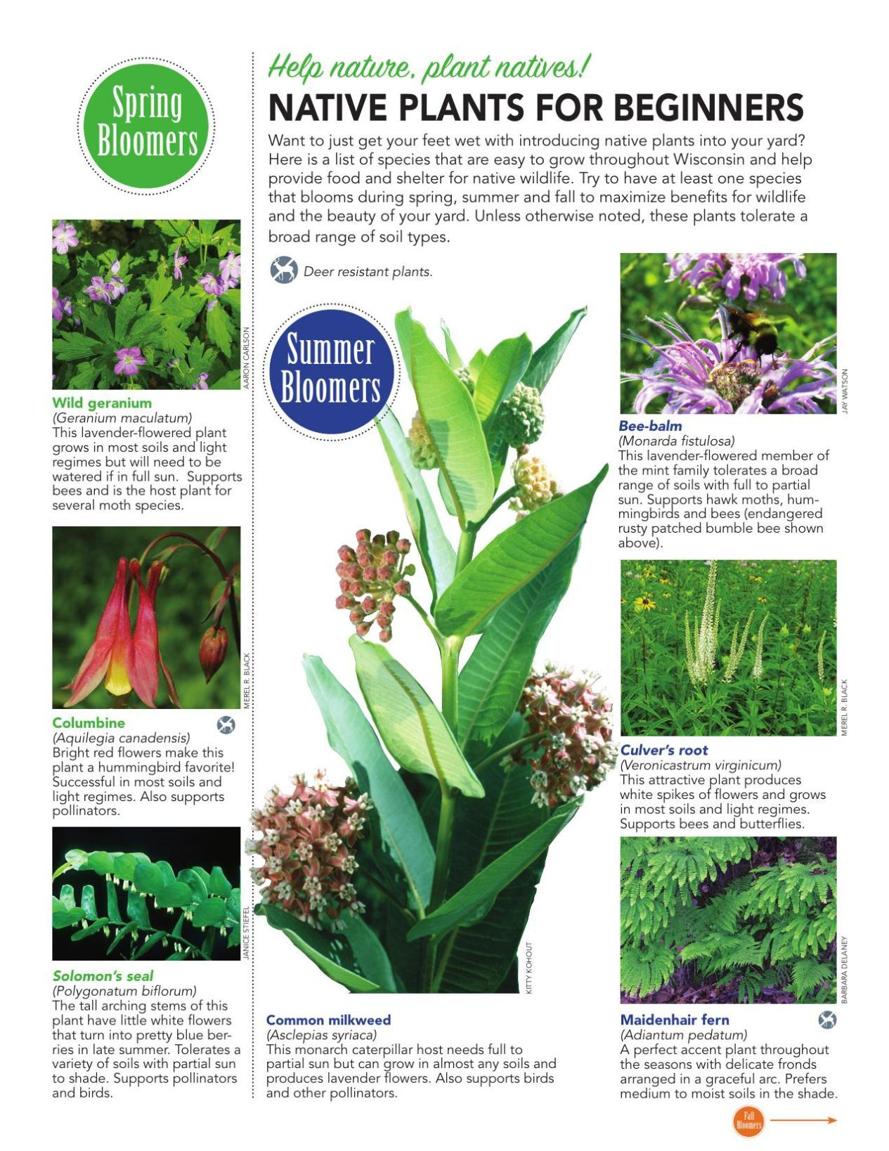 Native Plants for Beginners
