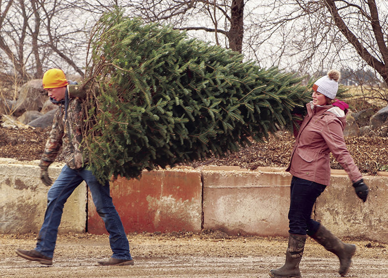 Local Christmas tree farms share roots