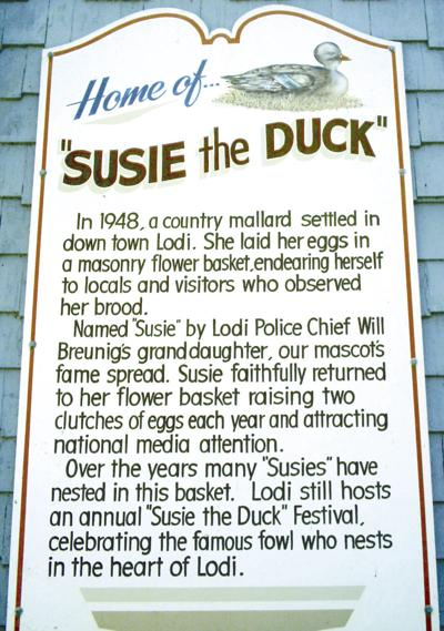 Susie the Duck