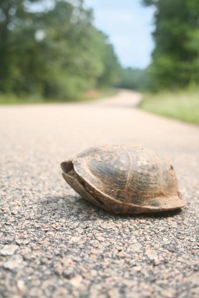 Turtle season is here