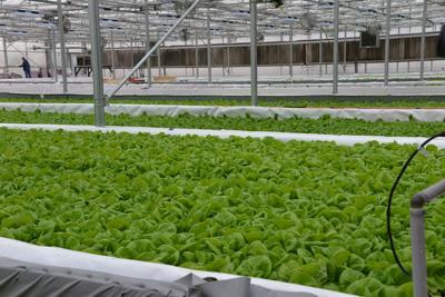 Future Farm Grown