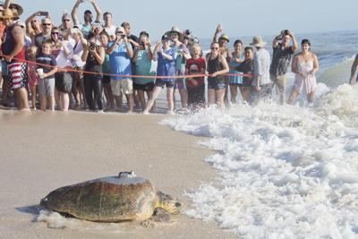 Tour de Turtles migratory race
