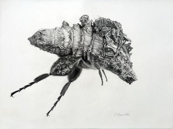 Mite Bee