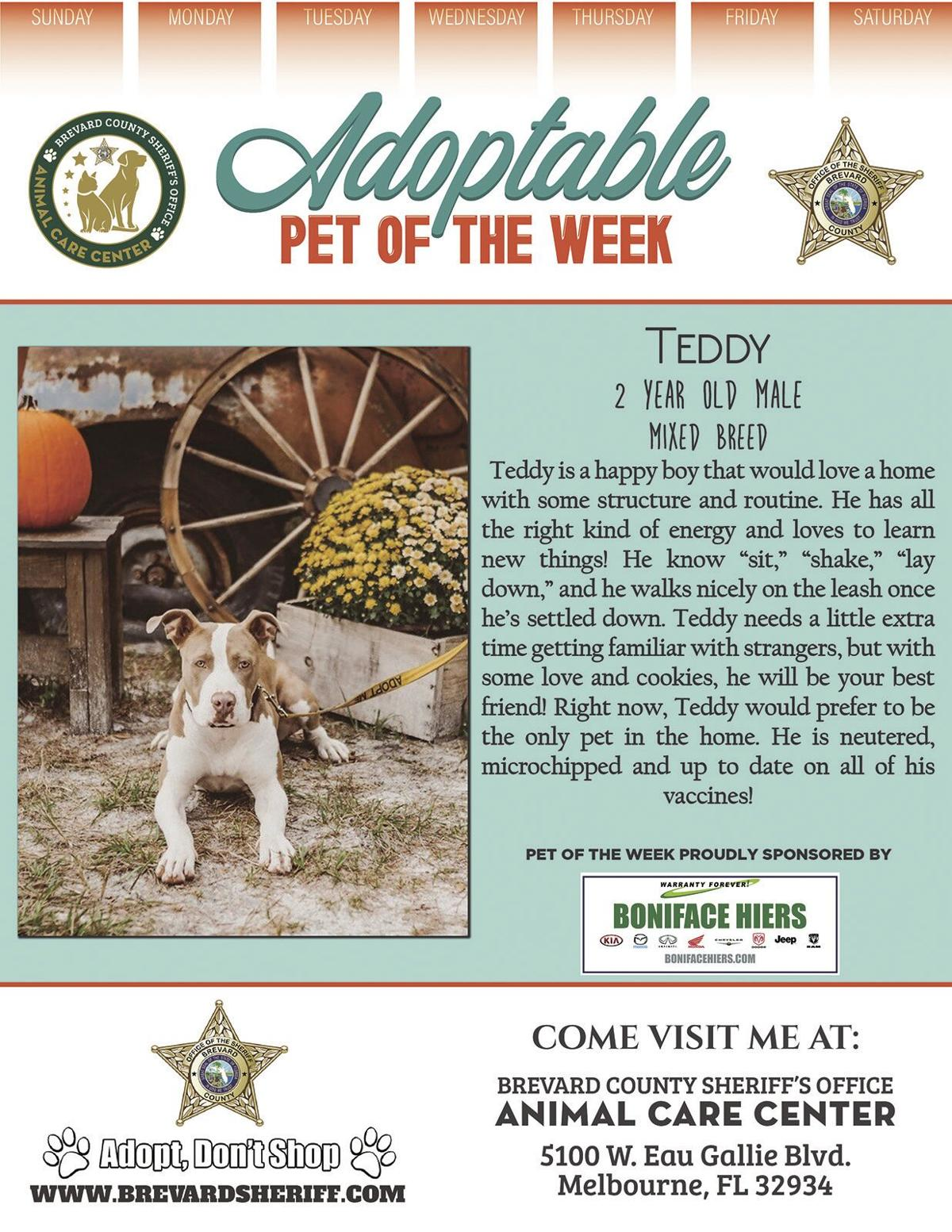 Adoptable Pet of the Week