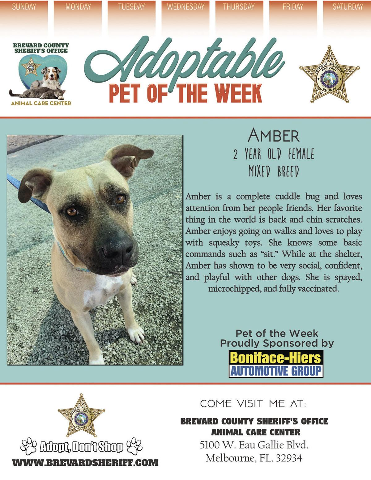 Adoptable Pet of the Week - Week of June 26, 2020