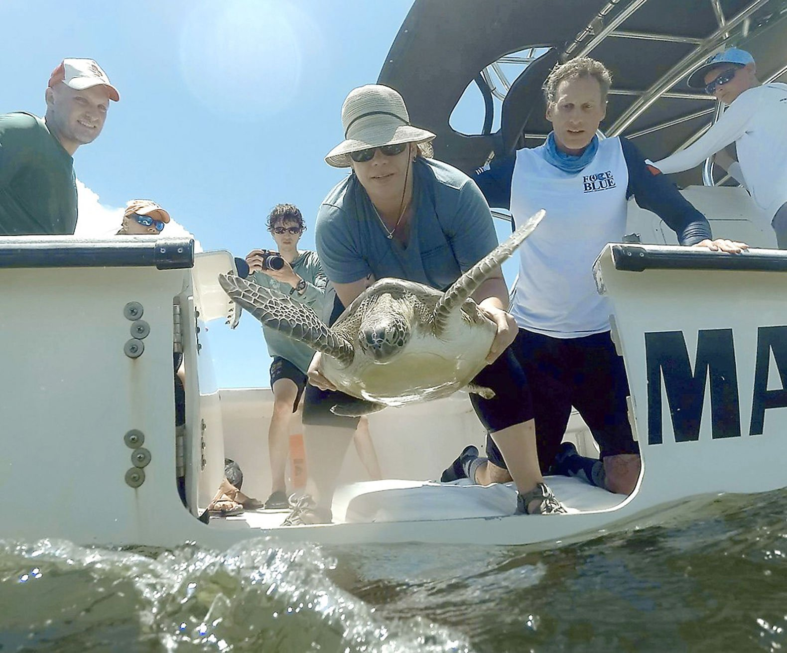 Harbor Branch veterinarian Annie Page-Karjian releases a turtle