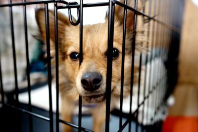 Animal Shelter photo
