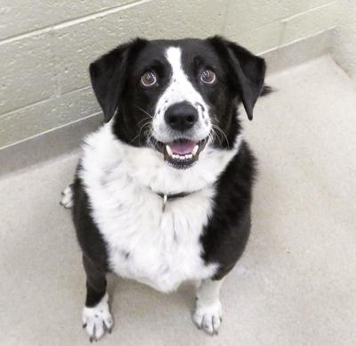 Looking for a home - Sept. 28, 2018