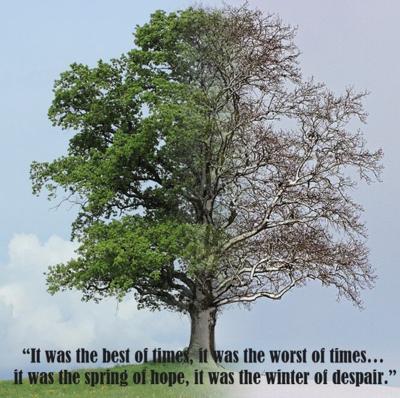 stewart - tree