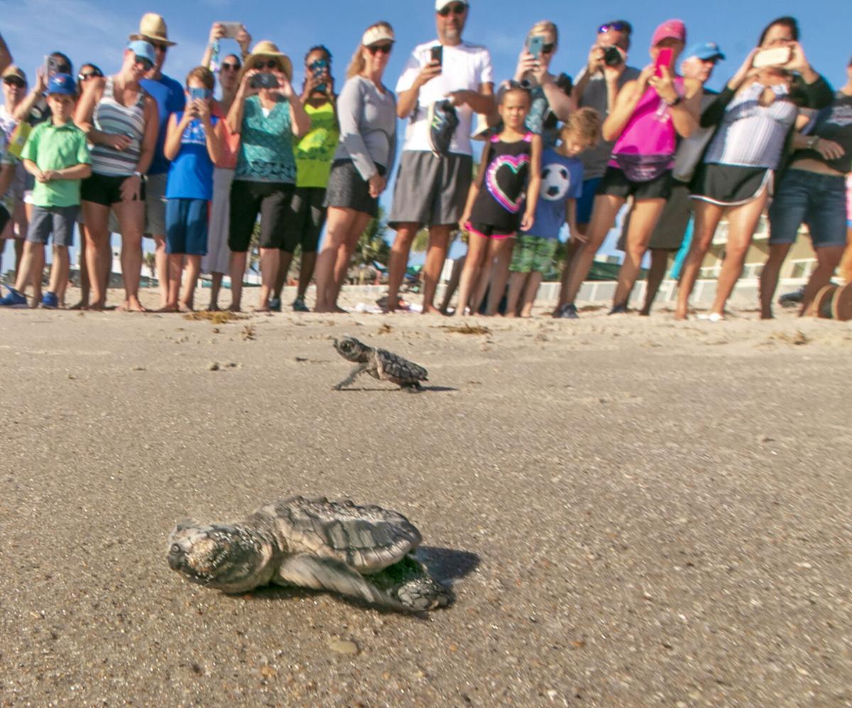 sea turtles - crowd watching