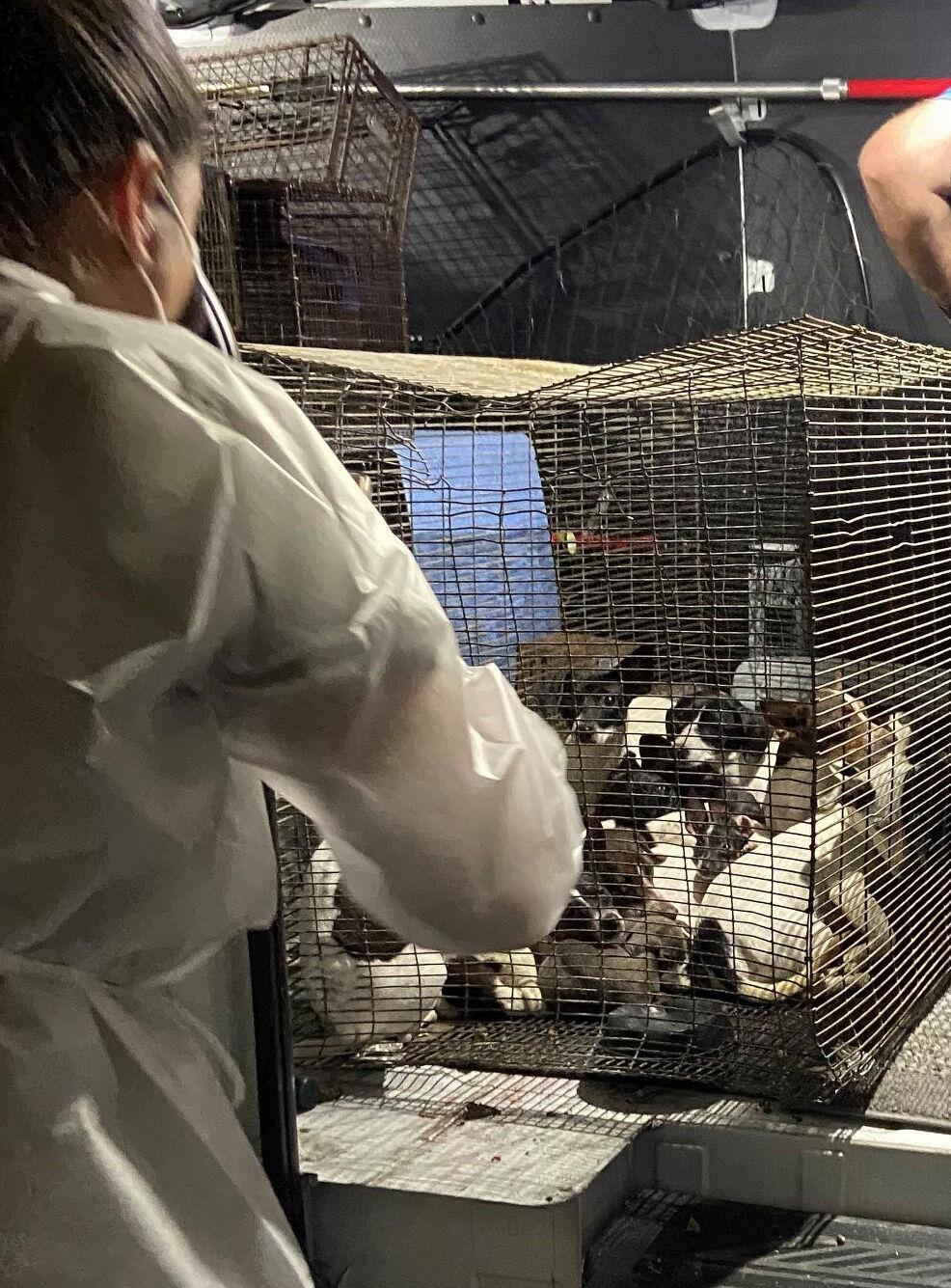Yates dog cruelty case 1