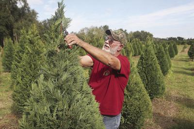About those Christmas trees | News