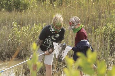 Marsh Exploring