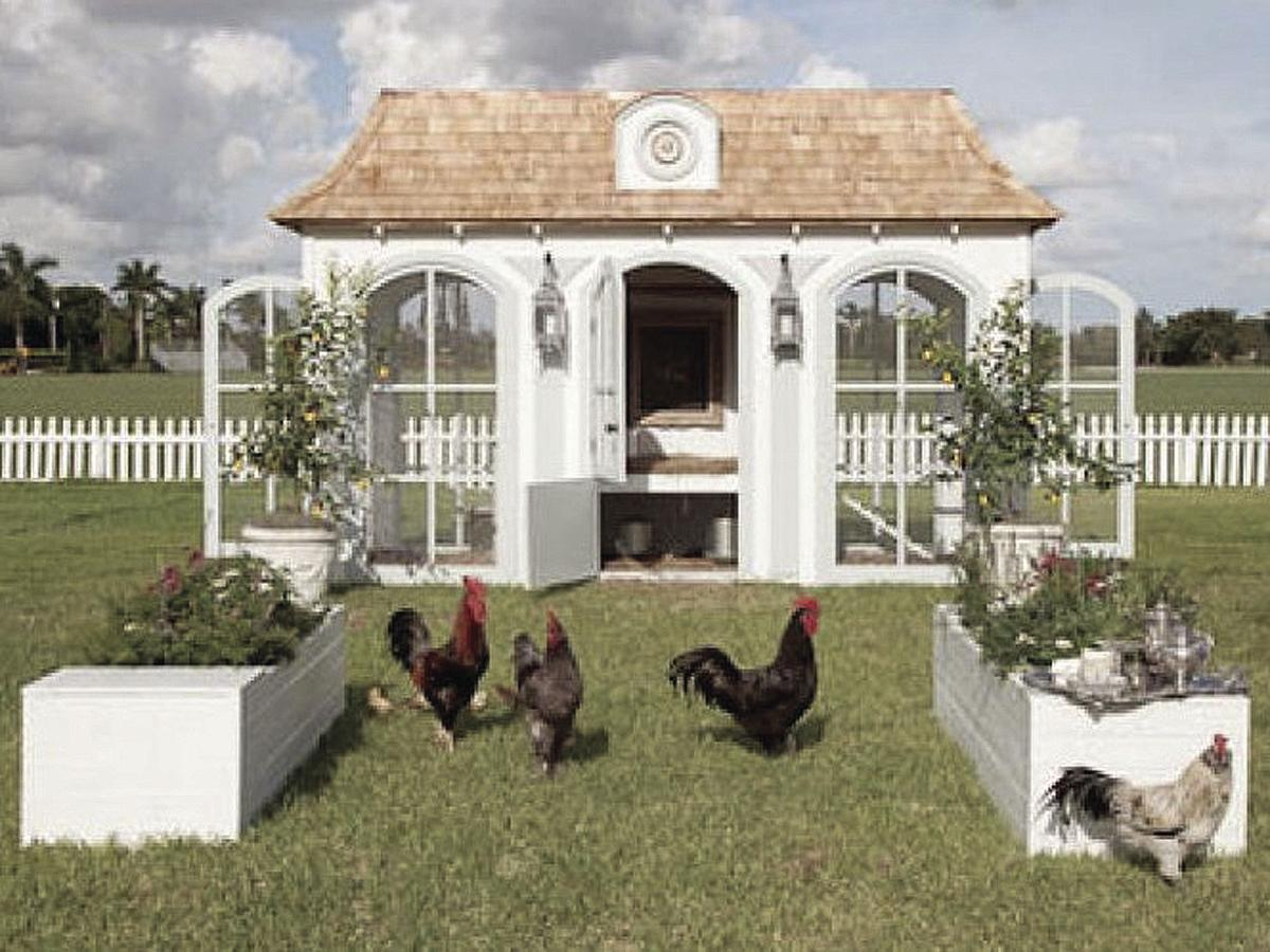 In Edgewater, only female chickens may apply | News