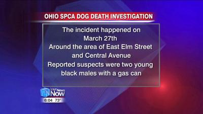 Dog beaten and set on fire in Lima being investigated by Ohio SPCA 1.jpg