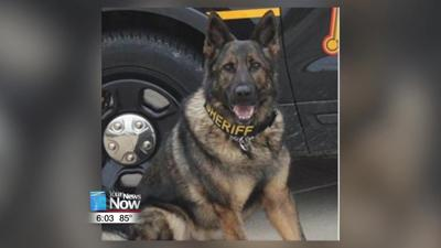 Mercer County K9 injured while searching for suspect 1.jpg