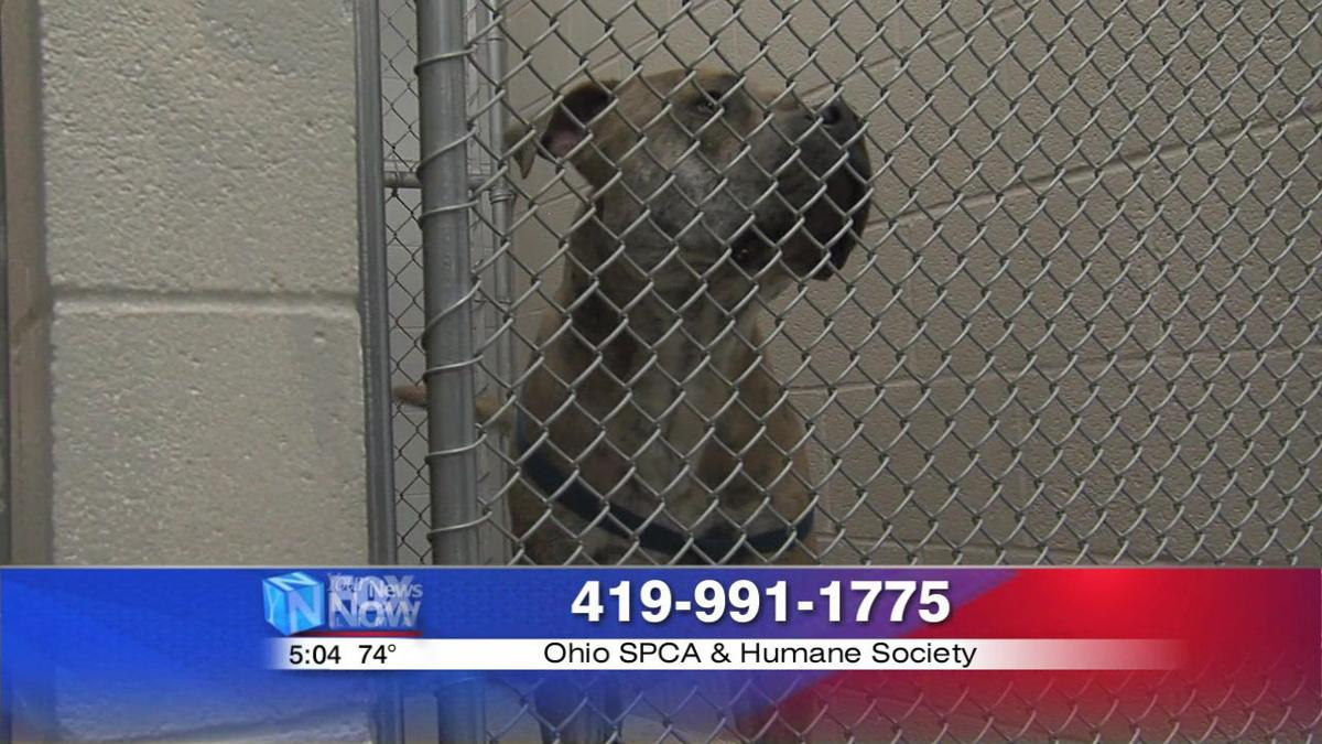 Allen County dog warden warns pet owners of heat dangers 2.jpg