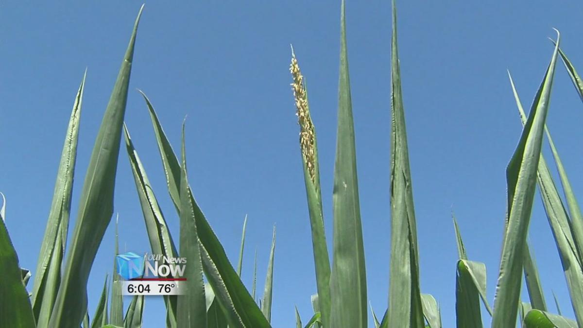 Early frost would make a tough season even tougher for area farmers 1.jpg