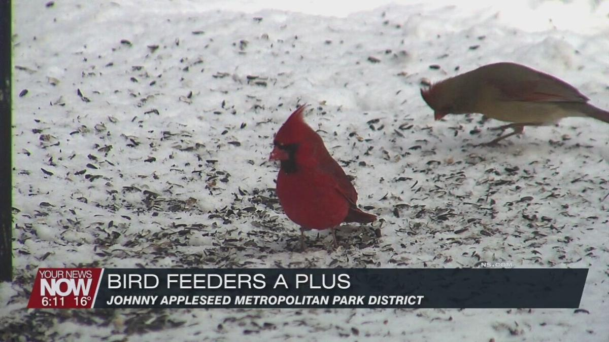 Snow covered ground limits food for birds - bird feeders give them a little help
