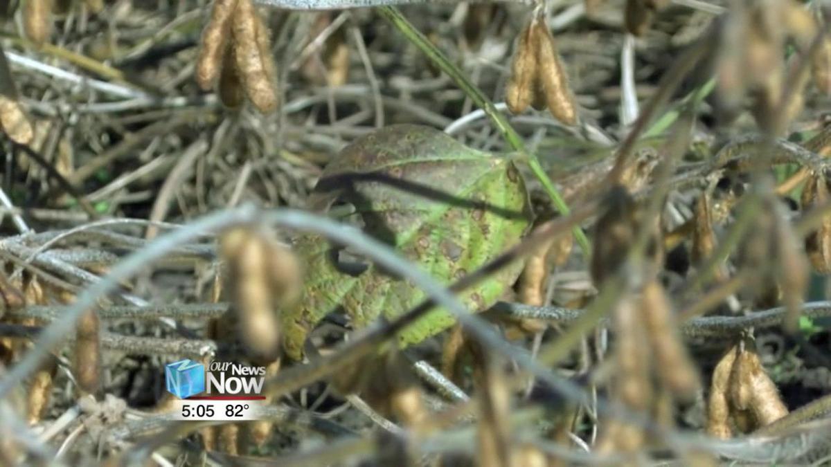 Corn crop insurance deadline looms as wet fields prevent planting 2.jpg