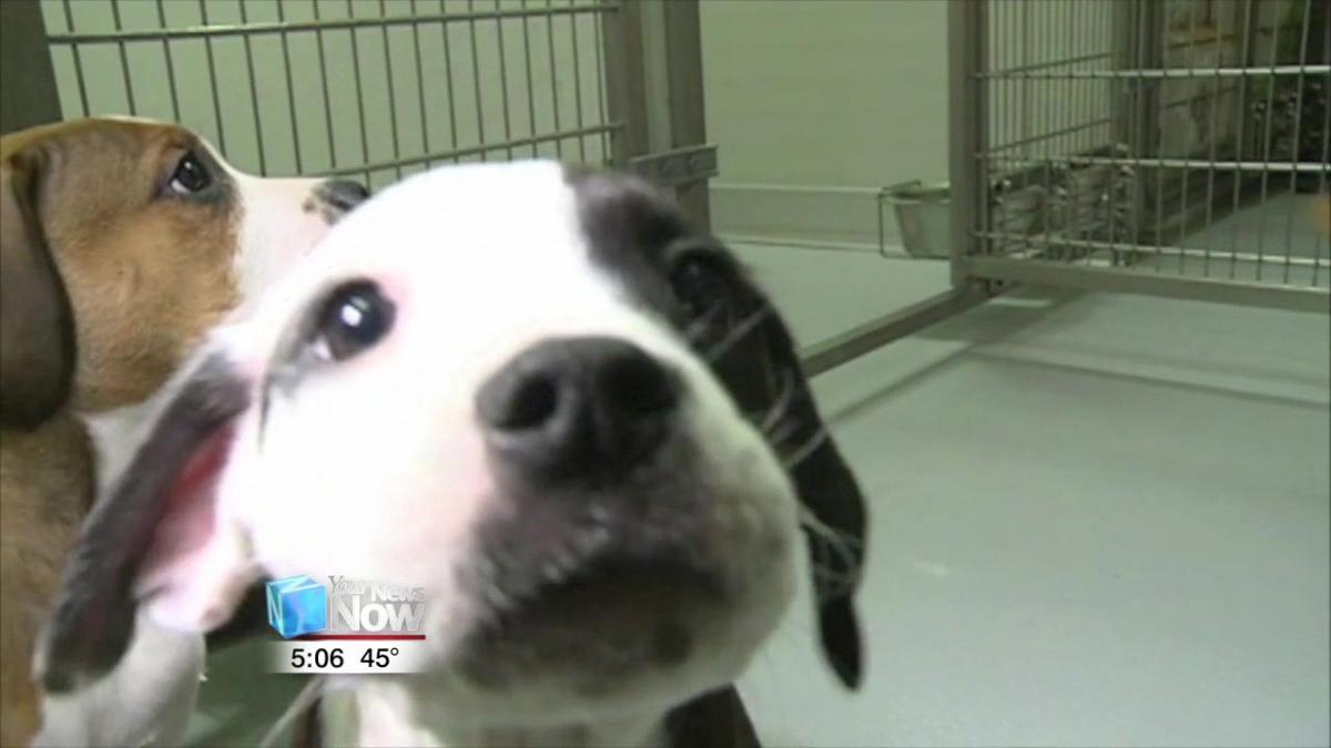 Dog tag deadline is January 31st 2.jpg