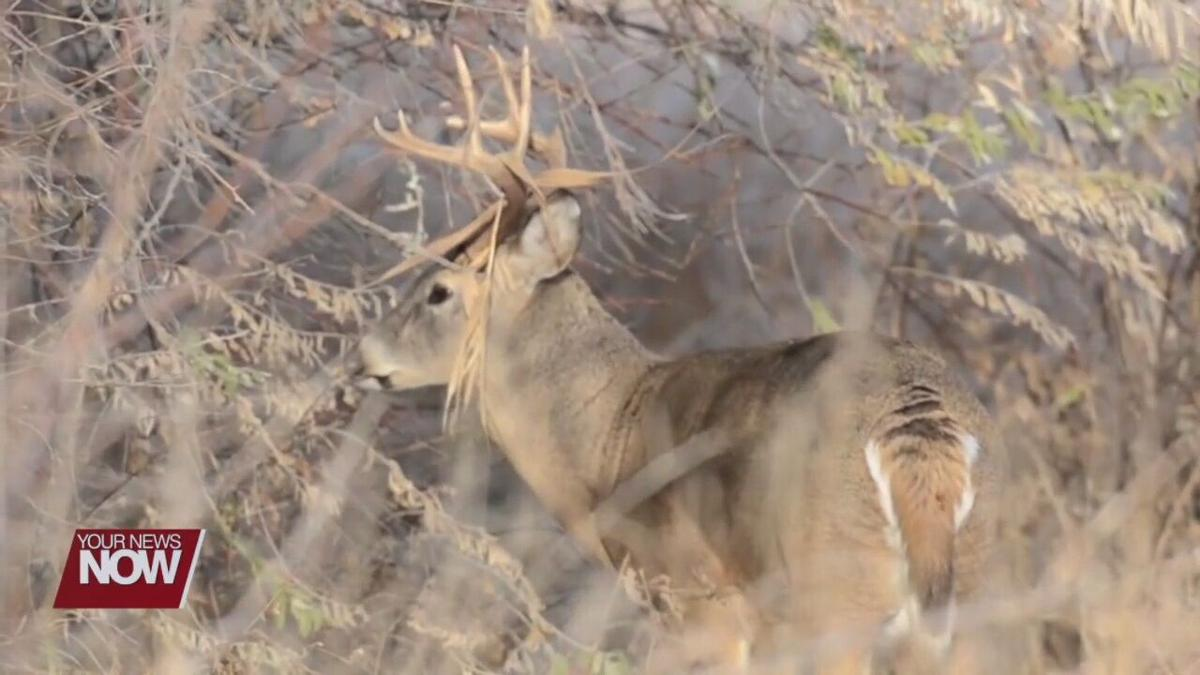 How you can help report the higher number of deer dying from EHD this year