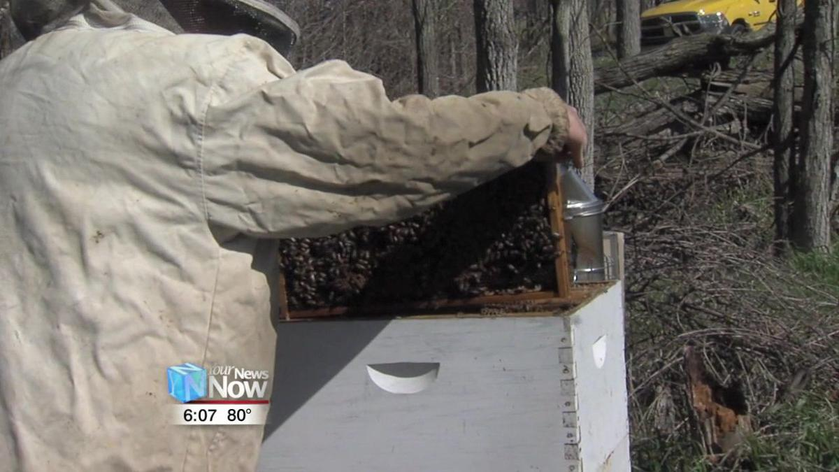 Local Beekeeper talks about population decline of bees 2.jpg