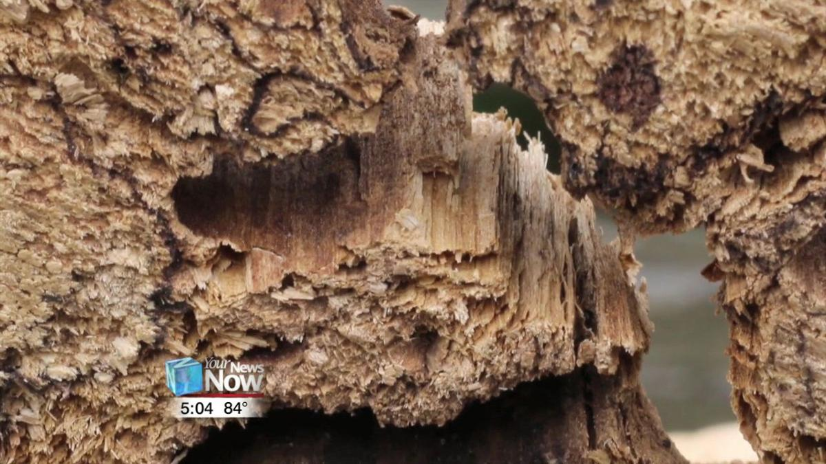 USDA asking people to check trees for invasive species in the month of August 1.jpg