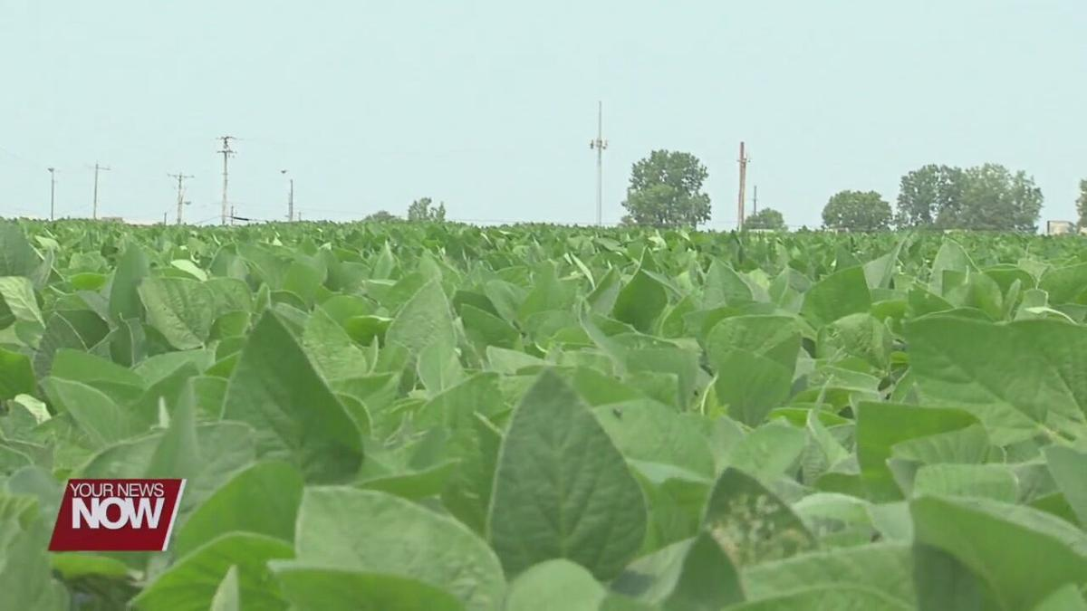 Rain last week and humidity this week is ideal for crop growth, but also pathogens