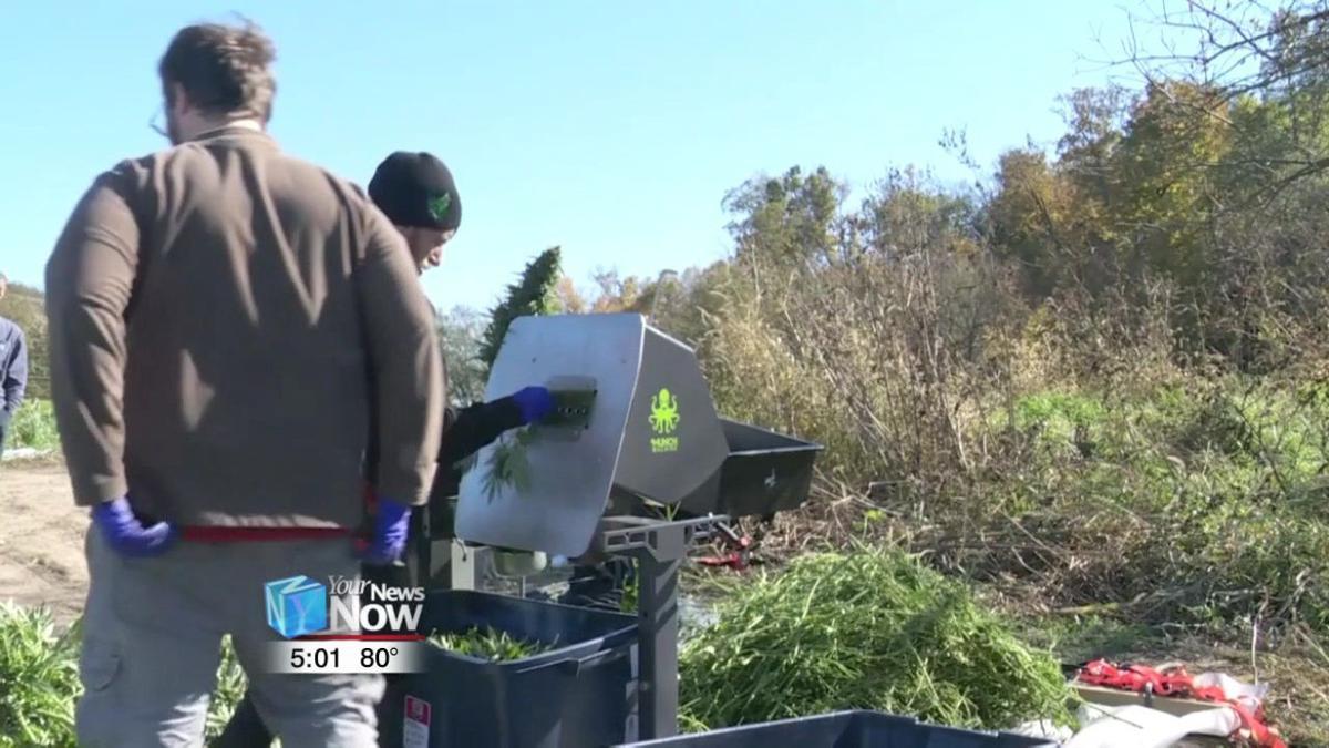 Ohio farmers could be growing hemp as soon as spring of 2020 2.jpg
