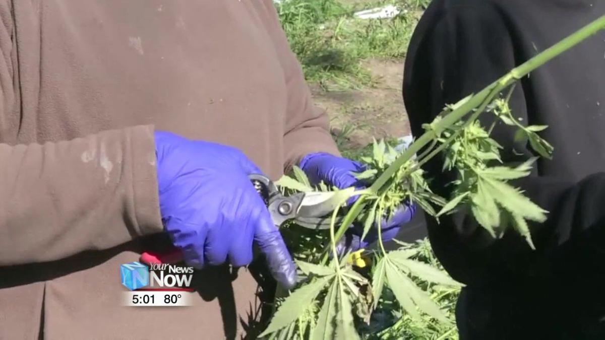 Ohio farmers could be growing hemp as soon as spring of 2020 1.jpg