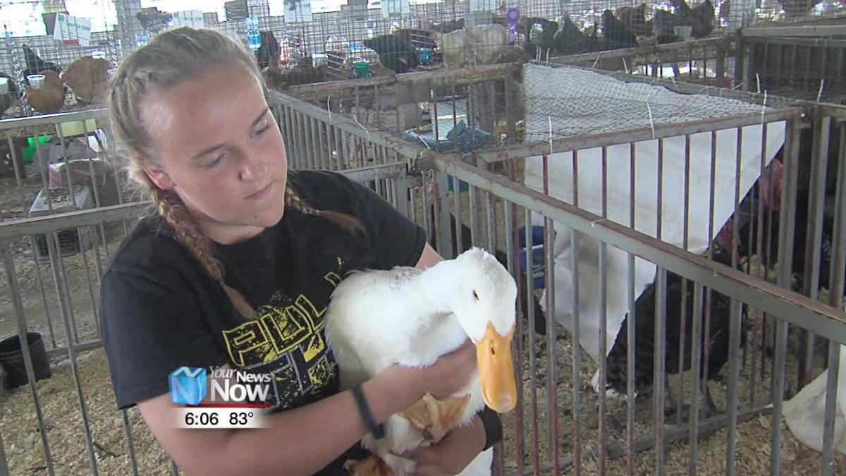 Participants get ready for the Junior Fair Poultry Showmanship and Breeding Show 2.jpg