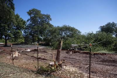 Tree removal OPC
