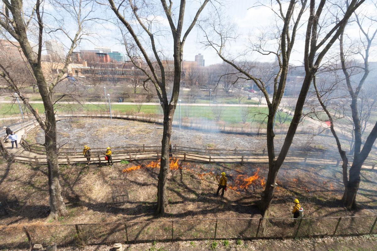 Nichols Park prescribed burn #3