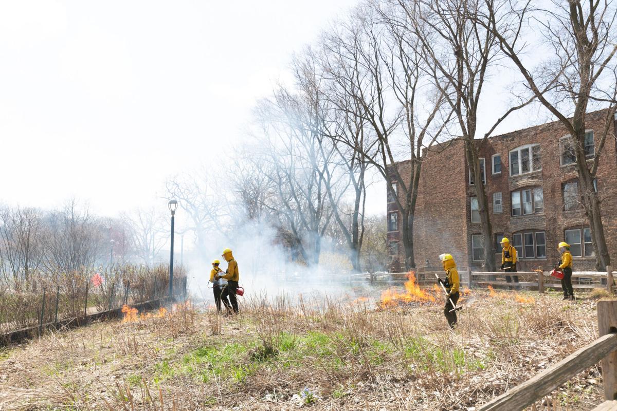 Nichols Park prescribed burn