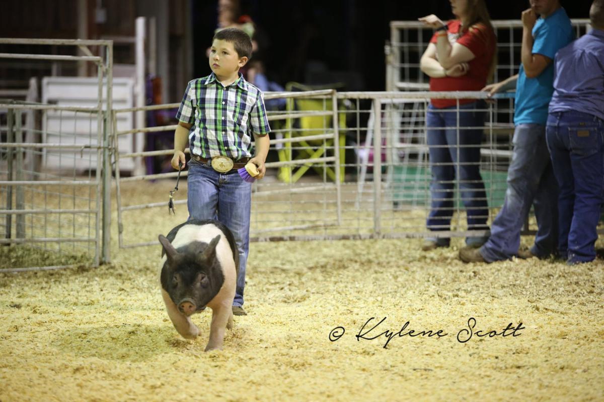 Pig show
