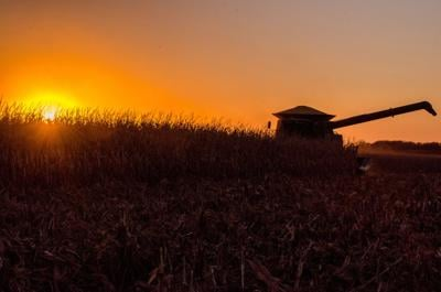 Corn Harvest-A Lovett-Fall.jpg