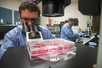 At the Plum Island Animal Disease Center (PIADC) in Orient Point, NY, ARS microbiologist(s), Douglas Gladue uses a confocal microscope to monitor cell cultures of ASFV vaccine candidates to determine when they are ready for harvesting, while Manuel Borca