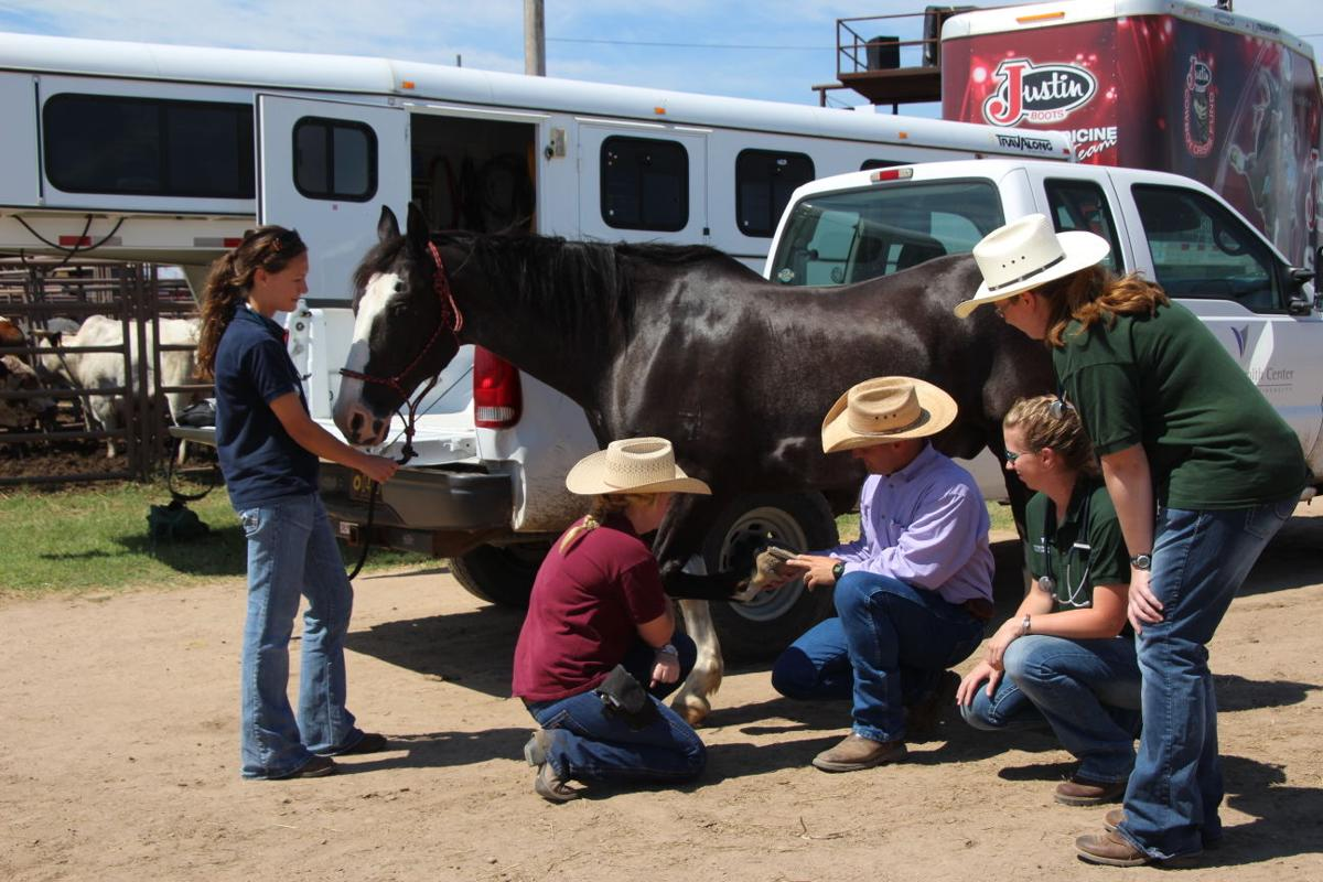 Equine Field Service Team Helps Care For Animals On The