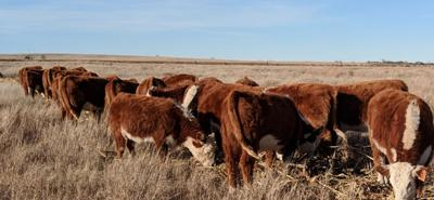 Feed testing can benefit your herd