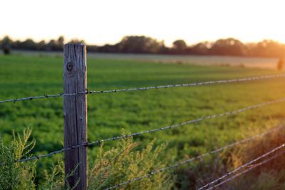 bermudagrass alfalfa.jpg