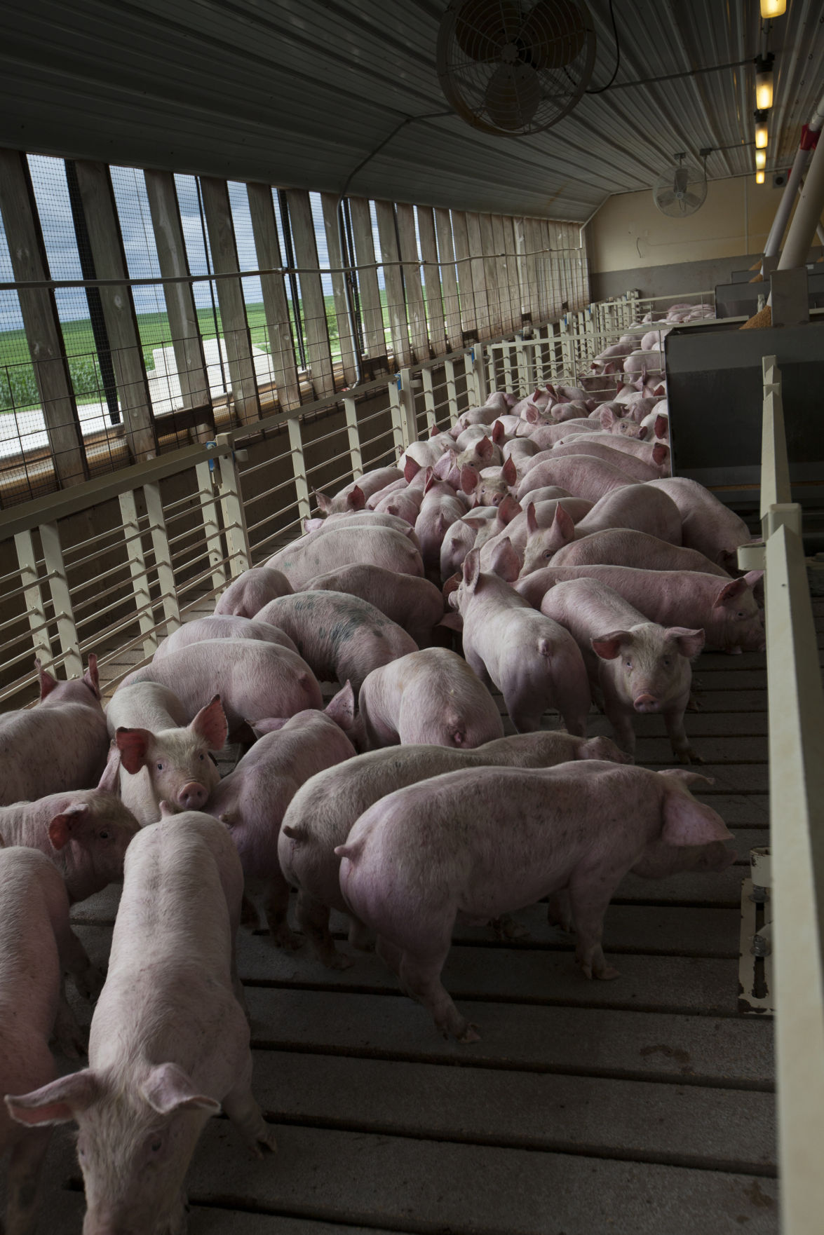 Hog producers care for the land jennifer carrico hpj hogs publicscrutiny Choice Image