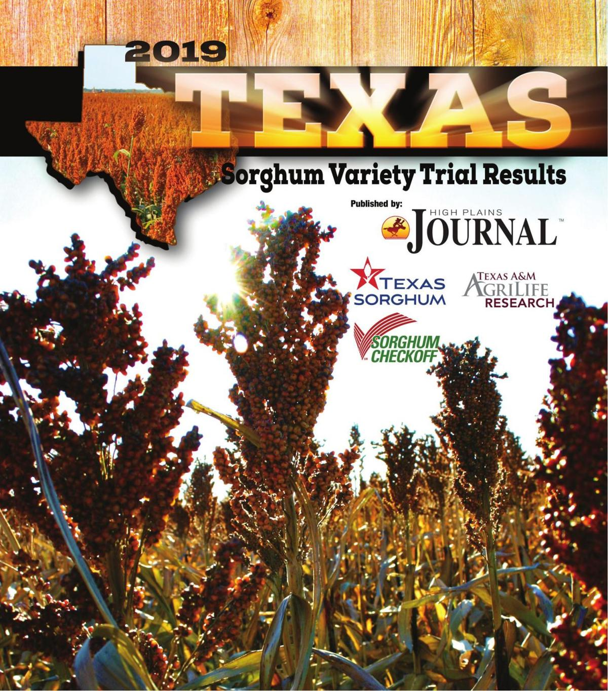 2019 Texas Sorghum